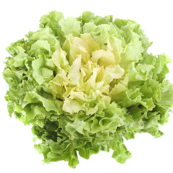 Steirischer Endivien Salat