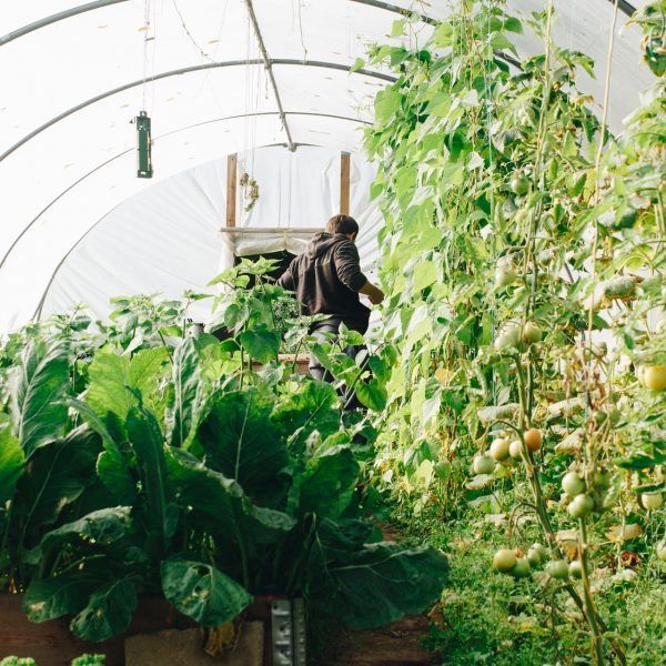agriculture-botanical-conservatory-1084540