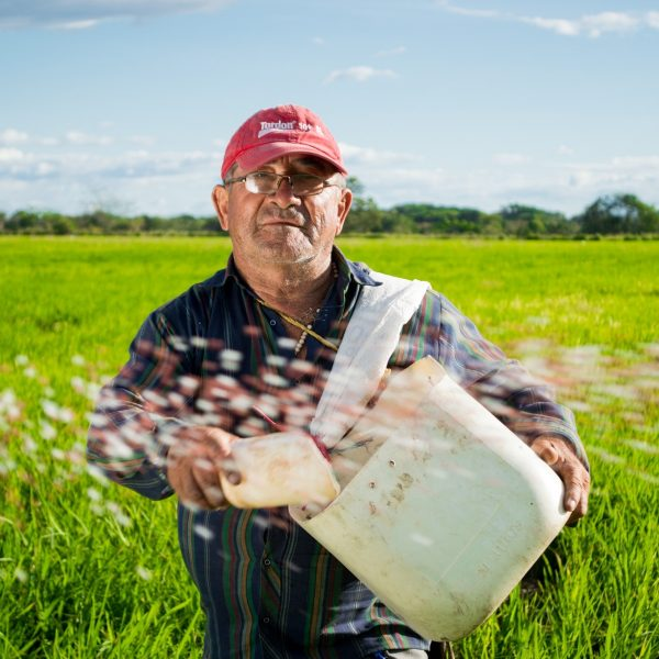 countryside-farm-farmer-50715
